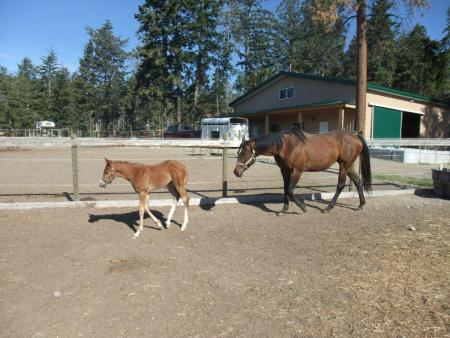 turn out orphan foal